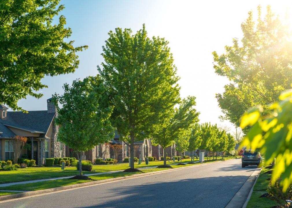 Arkansas, row of green trees in a neighborhood
