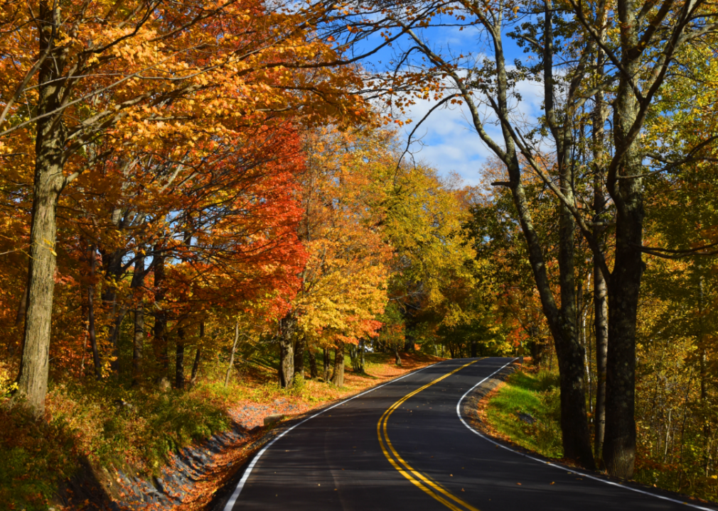 Photo of wooded roadway
