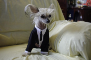 30 luxurious services for your pooch