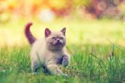 Tiniest cat breeds