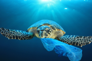10 most common items polluting the ocean
