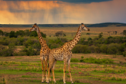 10 ways nature and animals forecast the weather