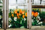 25 tips for urban gardening