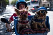 Most popular small dog breeds