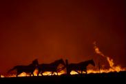 Australia's fires have already killed 1 billion animals—unpacking the tragedy through statistics