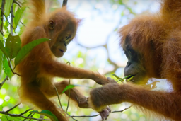 30 best nature documentaries of all time