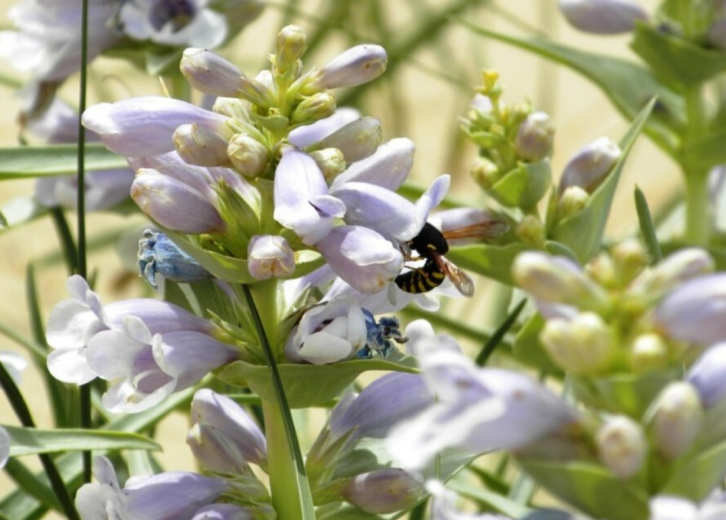 Endangered Plants To Watch Out For In Every State | Stacker